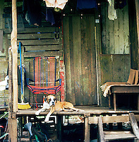 A dog relaxes outside a shack in a village at the Tortuguero National Park, East Coast, Tortuguera, Limon, Costa Rica