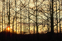 Everglades National Park Sunset thru cypress trees swamp, Florida in January