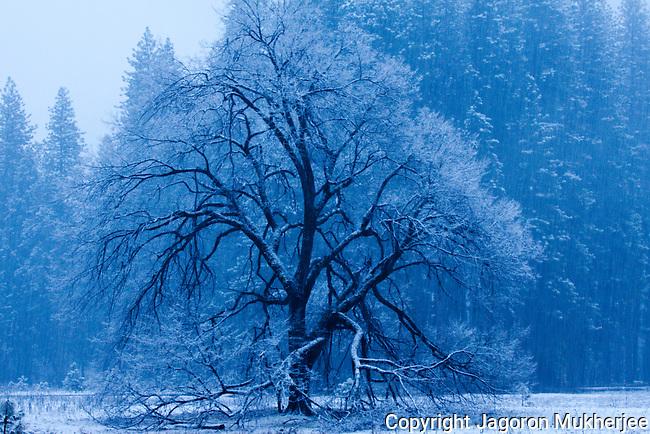 Yosemite Winter 2010