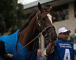 """Grand Arch and jockey Luis Saez win the 30th running of the Shadwell Turf Mile (Grade I) 1,000,000 """"Win and You're In Mile Division"""" over The Pizza Man at Keeneland for trainer Brian Lynch and owners Susan and Jim Hill.<br /> Samantha Bussanich/ESW/Cal Sport Media"""
