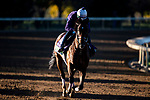 November 4, 2020: Raging Bull, trained by trainer Chad C. Brown, exercises in preparation for the Breeders' Cup Mile at Keeneland Racetrack in Lexington, Kentucky on November 4, 2020. Jon Durr/Eclipse Sportswire/Breeders Cup