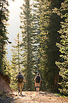 hikers on trail, insects, subalpine forest, sunset, summer, July, Colorado State Forest,  Rocky Mountains, Colorado, USA
