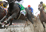 09 August 29: Our Edge (airborne) leads the way past the stands the first time as Summer Bird and Quality Road vie for position in the 140th running of the grade 1Travers Stakes for three year olds at Saratoga Race Track in Saratoga Springs, New York.