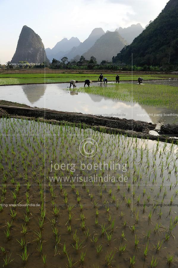 LAOS Vang Vieng , Reisfelder vor Kalkstein Bergkulisse , Frauen pflanzen Reissetzlinge um   .LAOS Vang Vieng, paddy fields infront of limestone mountains , women replant rice plants