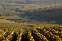 Europe/France/Champagne-Ardenne/51/Marne/Oger: Vignoble