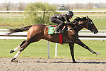 07 April 2011.  Hip #55 Empire Maker - Safe Haven filly consigned by Eddie Woods.