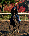 October 31, 2020: Gypsy King, trained by trainer Wesley A. Ward, exercises in preparation for the Breeders' Cup Juvenile Turf at Keeneland Racetrack in Lexington, Kentucky on October 31, 2020. Scott Serio/Eclipse Sportswire/Breeders Cup/CSM