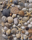 Interlitho, Alberto, MODERN, photos, mussels, KL16346,#n# moderno