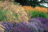 Miscanthus sinensis grass, Lavender, Lavatera and Calamagrostis acutiflora 'Karl Foerster' in drought tolerant garden border - Cover of Plants and Landscapes for Summer-Dry Climates