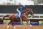 DEL MAR, CA - NOVEMBER 01: Sadler's Joy, owned by Woodslane Farm and trained by Thomas Albertrani, exercises in preparation for Longines Breeders' Cup Turf  during morning workouts at Del Mar Thoroughbred Club on November 1, 2017 in Del Mar, California. (Photo by Anna Purdy/Eclipse Sportswire/Breeders Cup)
