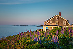 Coastal heath in the Harpswell Heritage Land Trust on Bailey Island in Harpswell, Maine, USA