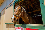 GEORGETOWN, KENTUCKY, MAY 06: Nicano is a new resident at the 14th Annual Fundraiser at Old Friends Farm on May 6, 2018 in Georetown, Kentucky. (Photo by Sue Kawczynski/Eclipse Sportswire/Getty Images)