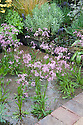 """Ragged robin (Lychnis flos-cuculi 'Terry's Pink') growing in a shallow pond. Environment Garden section of """"Urban Oasis"""" show garden, designed by Chris Beardshaw, Hampton Court Flower Show 2012."""