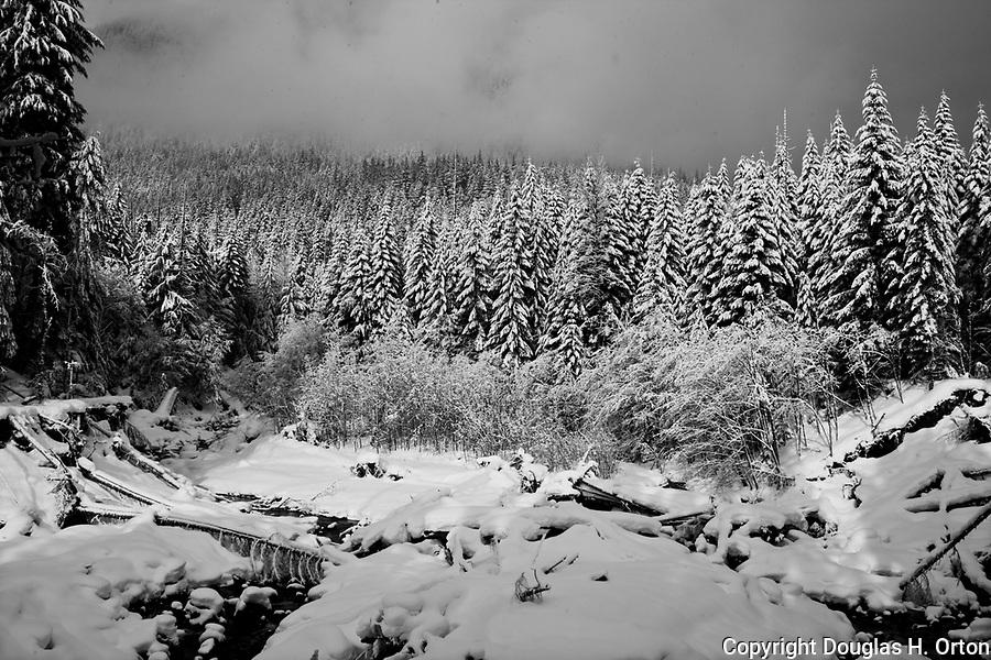 Kautz Creek, near Longmire in Mount Rainier National Park lies frozen in winter snow.  Black and White.  Gray Scale.