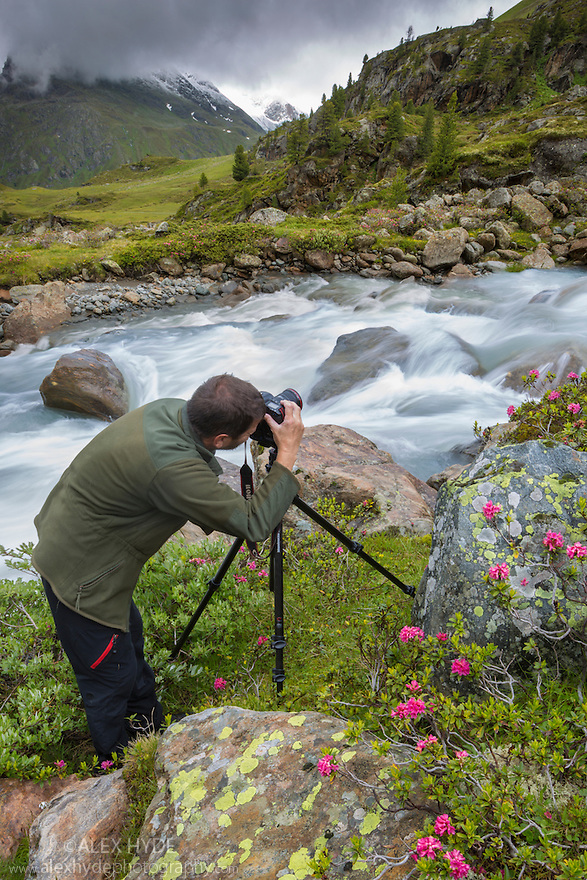 Photographer in mountain landscape with blooming Alpenrose {Rhododendron ferrugineum}. Kaunertal Naturpark, Nordtirol, Austrian Alps. July.