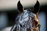 AUGUST 27, 2021: A Horse gets a bath at Del Mar Fairgrounds in Del Mar, California on August 27, 2021. Evers/Eclipse Sportswire/CSM