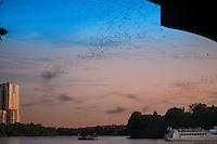 Internationally famous Austin, Texas bat-watching cruise excursion departs nightly when March heralds the return of the Congress Avenue bats in Austin. From March through April thousands of mostly female, pregnant Mexican free-tailed bats migrate North to give birth. And they stay through the spring, summer, and early fall.