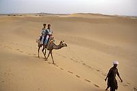 Kamel, Sam-Dünen bei Jaisalmer (Rajasthan), Indien