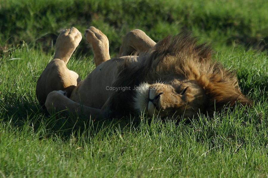 Tanzanie  parc national de Ngorongoro