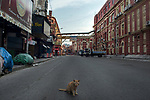 A cat sits on the deserted Hogg street in Kolkata midst the 2nd phase of lockdown in India  due to covid 19 pandemic. This is to curb the spread of Covid 19 in the country. The second phase is handled with more strict rules by the administration. Kolkata, West Bengal, India. Arindam Mukherjee.