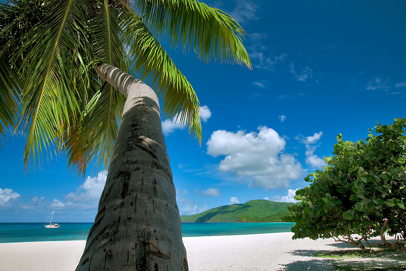 Palm tree at Brewers Bay Beach. St. Thomas. US Virgin Islands.