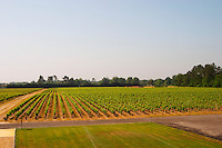 A view over the vineyard planted with merlot Chateau Paloumey Haut-Medoc Ludon Medoc Bordeaux Gironde Aquitaine France