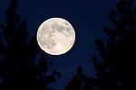 The blue moon rises near Gardnerville, Nev. on Friday, Aug. 31, 2012. .Photo by Cathleen Allison