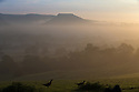 20/09/15<br /> <br /> Pheasants adds to an already stunning, picture-postcard, early autumn scene, as early morning mists cling to farmland  surrounding Dovedale and Thorpe Cloud in The Derbyshire Dales near in the Peak District.<br /> <br /> All Rights Reserved: F Stop Press Ltd. +44(0)1335 418365   www.fstoppress.com.
