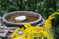 Insekten-Tränke, Insektentränke, Tränke für Insekten im Garten, Wasser, Wasserangebot, Wasserschale mit Landestein