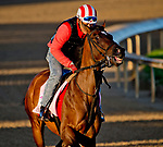 LOUISVILLE, KY - APRIL 30: Wonder Gadot, trained by Mark Casse, exercises in preparation for the Kentucky Oaks at Churchill Downs on April 30, 2018 in Louisville, Kentucky. (Photo by John Voorhees/Eclipse Sportswire/Getty Images)