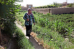 8 June 2013, Mazar-i-Sharif, Balkh Province, Afghanistan. Local woman Sabria Nawabi inspects her tomato plants at her small plot - or kitchen garden - on her family property in Mazar-i-Sharif.  She is cultivating eggplants , corn, radish and tomato. Sabria is a beneficiary of the new National Horticulture and Livestock Project (NHLP) that is providing seedlings , fertiliser and technical help to beneficiaries.  The NHLP is providing training and equipment to farmers to assist in increasing production and to improve management of lands and animals. Picture by Graham Crouch/World Bank