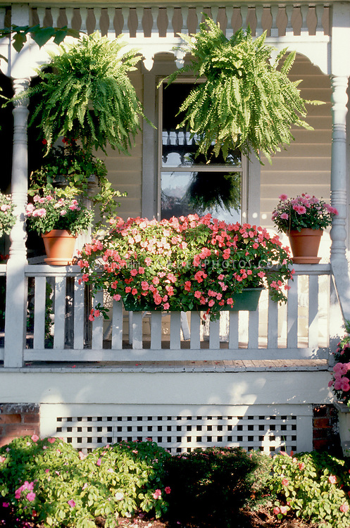 Curb appeal container garden on Victorian style house front porch with impatiens in windowbox on rail, hanging plants Boston ferns, pots, sun and shade in summer