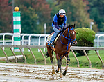 October 2, 2020: Mr. Big News exercises as horses prepare for the Preakness Stakes at Pimlico Race Course in Baltimore, Maryland. Scott Serio/Eclipse Sportswire/CSM