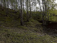 FOREST_LOCATION_90066