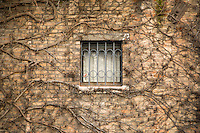 Window framed by vines in Venice, Italy