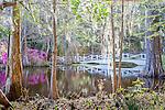 Beautiful bridges span the lake at Magnolia Plantation and Gardens in  Charleston, South Carolina, USA