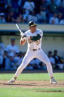 OAKLAND, CA - Jose Canseco of the Oakland Athletics in action during a game against the Kansas City Royals at the Oakland Coliseum in Oakland, California in 1997. Photo by Brad Mangin
