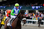 31 October 2009: Derby and Preakness winner, Barbaro's full brother Lentenor, out of Dynaformer and La Ville Rouge, finished a handy third with Julien Leparoux in the irons, in the horse's maiden race at Keeneland.