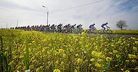 peloton through the rape (flower) fields<br /> <br /> <br /> Nokere Koerse 2014