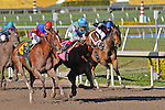 14 February 2010: Much Rejoicing with Elvis Trujillo wins a Maiden Special Weight race at Gulfstream Park in Hallandale Beach, FL..