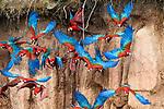 Central & South America: Birds