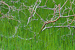Branches in marsh grass, Zion National Park, Utah, USA