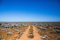 The track into remote Rawlinna Station in Western Australia