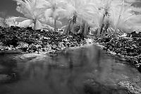 infrared photo, Queens bath at Makalawena beach area, north Kona coast, The Big Island of Hawaii