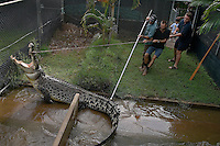 Crocodylus--Grahame Webb 08 8947 2510..Crocodile Farm in Darwin Australia.  These men are capturing this reptile so a dress-up Santa can sit on him for their annual Christmas card.