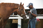 HALLANDALE BEACH, FL - JANUARY 21: California Chrome gets a bath at the barn after working 5 furlongs at Gulfstream Park. (Photo by Arron Haggart/Eclipse Sportswire/Getty Images