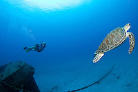 Heather Black and a turtle at the tugboat named the Coakley Bay, one of the deep wrecks at  Butler Bay <br /> St. Croix<br /> U.S. Virgin Islands