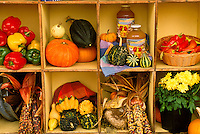 Vermont farmers market harvest display box including juice, Indian corn mums, pumpkins, sweet peppers, and Chili peppers, in  Westminster VT