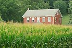 Old brick farmhouse and corn in tassel.