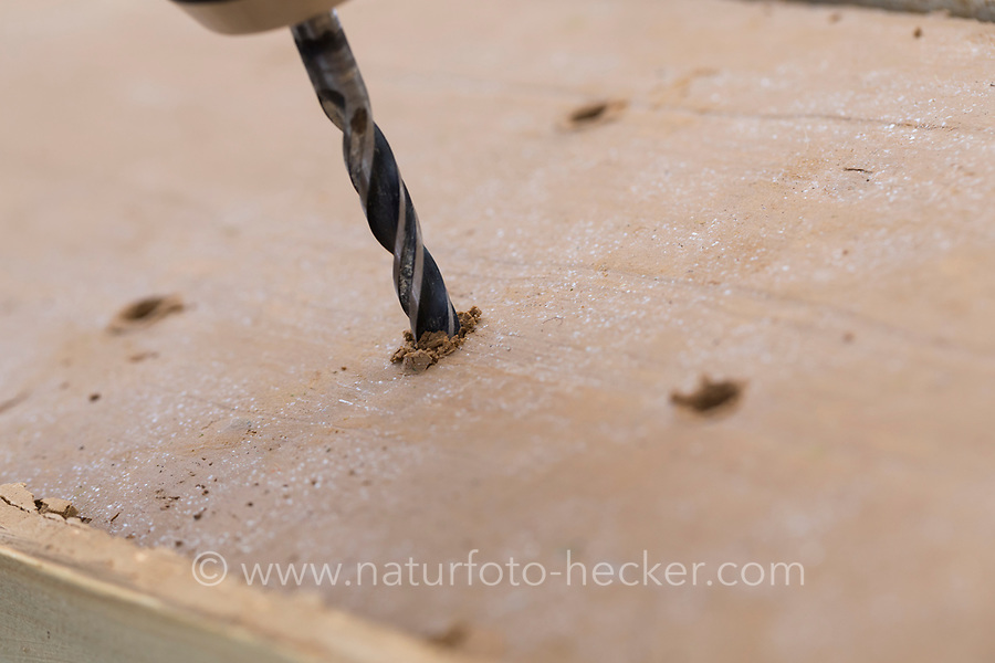 Wildbienen-Nisthilfe aus Lehm, Baulehm, Lehmputz, Lehmwand. Schritt 5: einige 1-2 cm tiefe Löcher in den Lehm bohren als Starthilfe. Wildbienen-Nisthilfen, Wildbienen-Nisthilfe selbermachen, selber machen, Wildbienenhotel, Insektenhotel, Wildbienen-Hotel, Insekten-Hotel